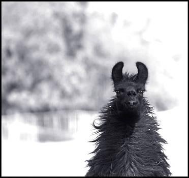 Winter Llama by devilicious