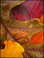 Fall Mosaic by devilicious
