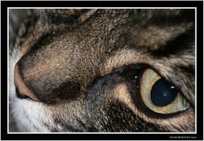 Cat Eye by adambarefoot