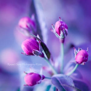Sweet Beginnings by RHCheng