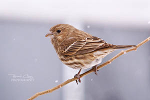 .:Snow Bird:. by RHCheng