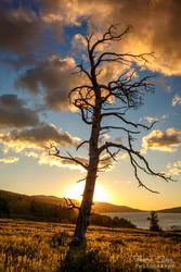 .:Skeleton Tree Sunrise II:. by RHCheng
