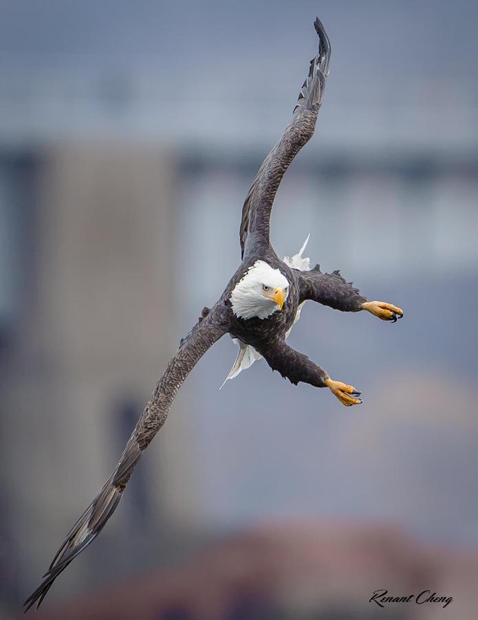 .:Acrobatic II:. by RHCheng