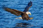 .:Eagle Fishing I:. by RHCheng