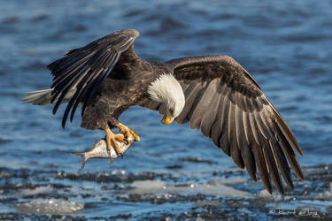 .:A Good Catch I:. by RHCheng