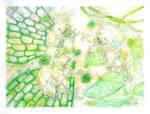 Waterbears by Banvivirie