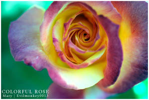 Colorful Rose by evilmonkey0013