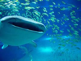 whale shark by ribonread127