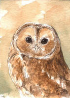 Tawny Owl ACEO by Pannya
