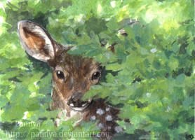 Peek-a-Boo ACEO by Pannya