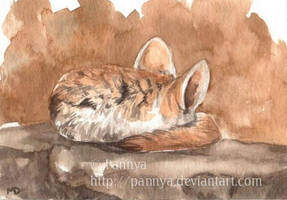 Sleeping Fennec ACEO by Pannya