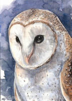 Barn Owl ACEO by Pannya