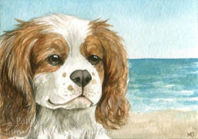 Cavalier at the beach ACEO by Pannya