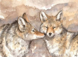 Coyote greeting ACEO by Pannya