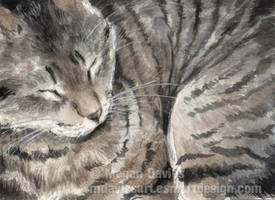 Tabby Curl-up ACEO by Pannya