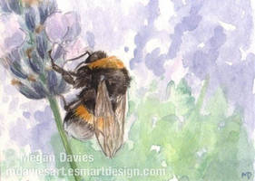 Lavender bumblebee ACEO by Pannya