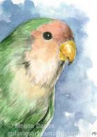 Peach-faced Lovebird ACEO by Pannya