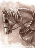 Draft Horse ACEO by Pannya