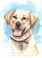 Pet portrait - Phoebe by Pannya