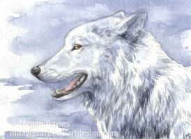 White Wolf ACEO by Pannya