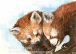 Red Panda Snuggle by Pannya