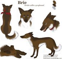 Brie by Pannya