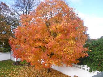 Sunshine tree by 4chocolatemew