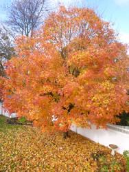 Sunshine tree 2 by 4chocolatemew