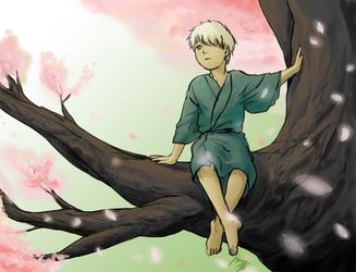 Cherry Blossom by ashen0507