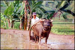 Java, Indonesia (2002) by Khoshq