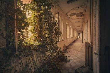 Jungle by AbandonedZone