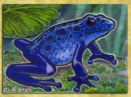 ACEO/ATC: Blue Dart Frog by crocodiledreams