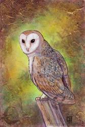 Barn Owl by crocodiledreams