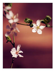 Finally spring again by allsoulsnight