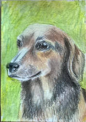 Aceo DOG 2 by sweetpie2