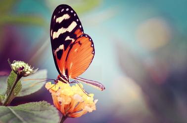 Butterfly by darkpsychea