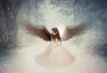 Winter Angel by PolarPhoenix