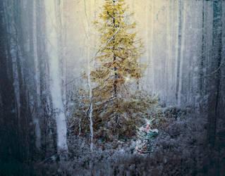 Secret In The Woods by Frama