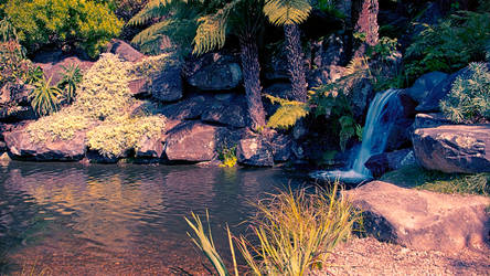 Pond at Mount Tomah Botanic Gardens by Bartius007