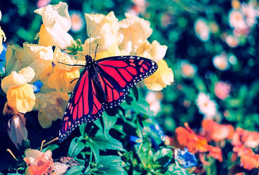 Butterfly by Bartius007