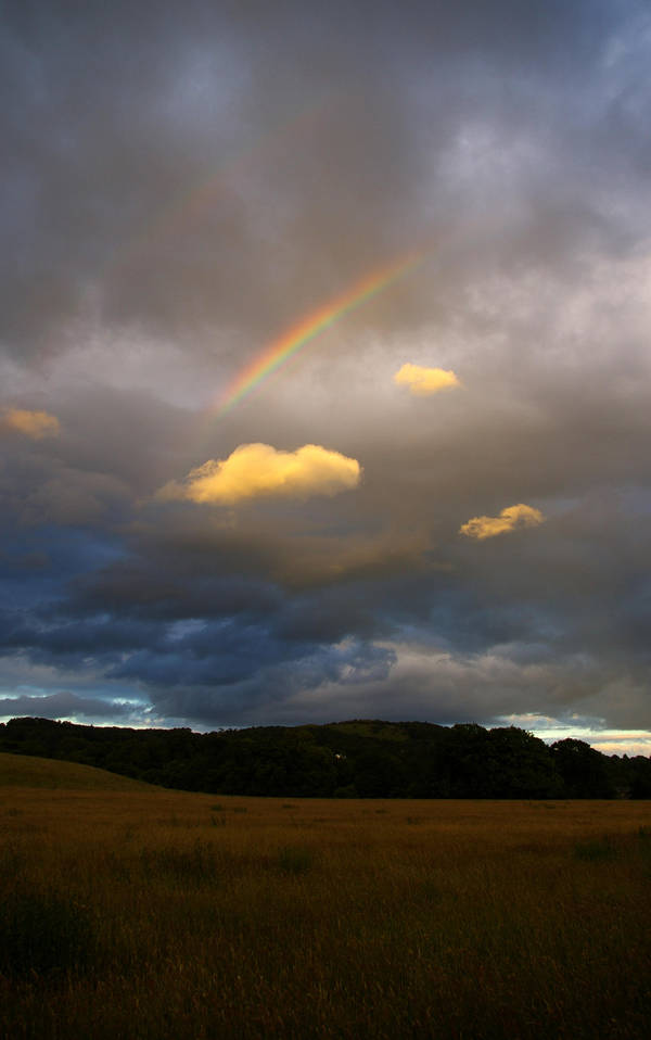 Rainbow by glueface