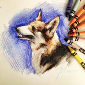 Corgi in Crayola Crayons by Capukat