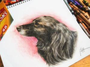 Crayon Portrait commission by Capukat