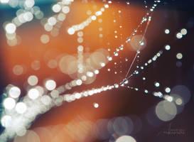 Dew by Annarigby