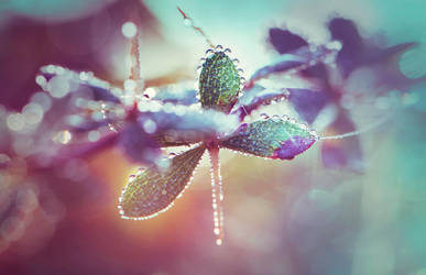 Morning Dew. by Annarigby