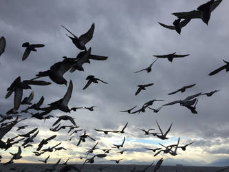 Flight of the Pigeons by AriesRCN