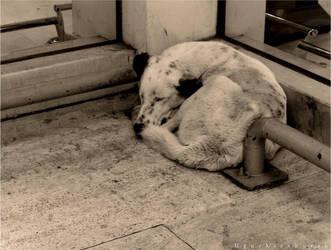 Dog II by kisakureku