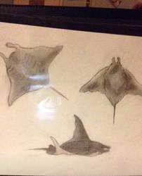 Manta rays by XxBleedxforxmexX
