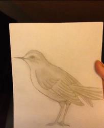 This bird was awesome  by XxBleedxforxmexX