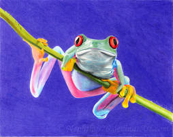Tree Frog by Nephthys76